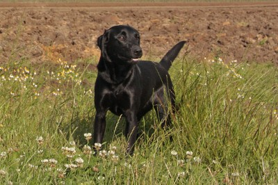 Wood Fen Gundogs Kinta